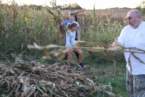Corn Harvests 2019